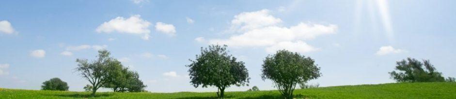 Landschaft der E-Assessments in Hessen