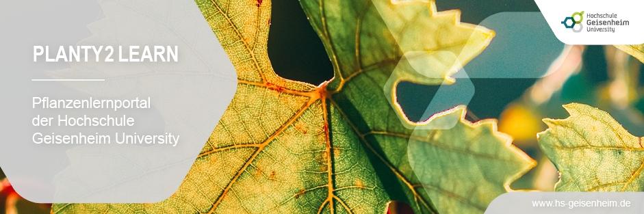 PLANTY2Learn – Interaktives Selbststudium mitten im Weinberg